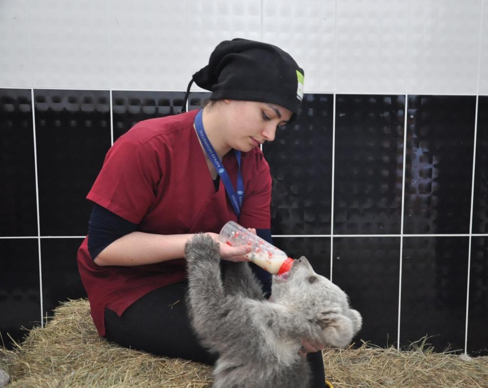 Yavru ayı bakıcısını annesi sanıyor 1