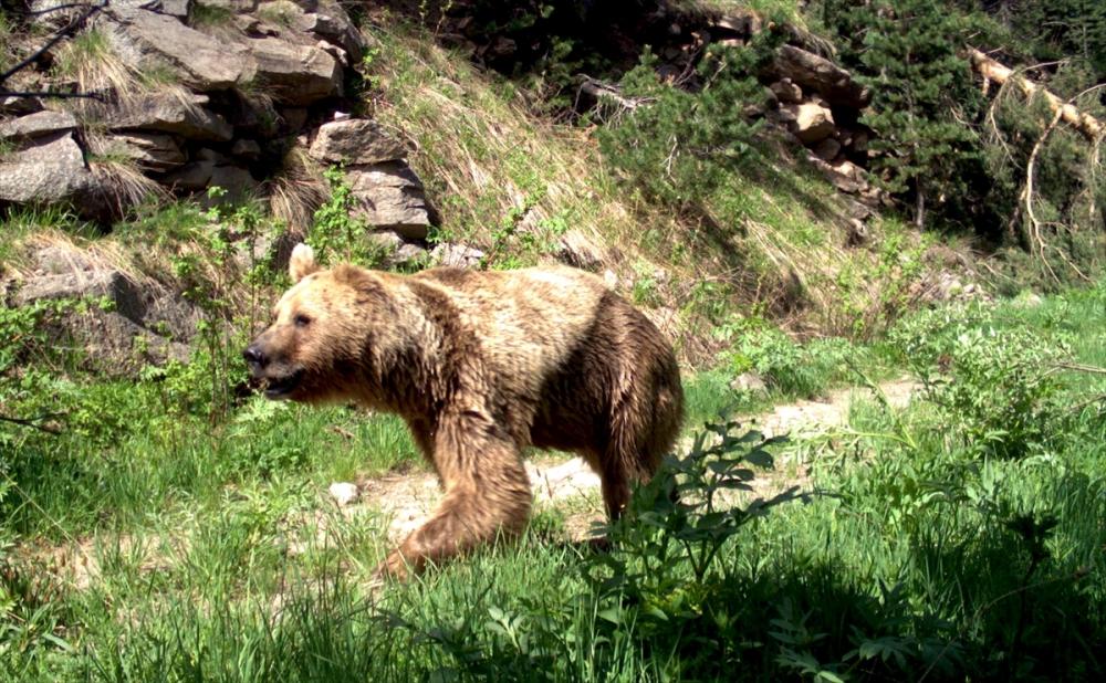 Kars'ta fotokapana yakalanan yaban hayat Kaynak: Kars'ta fotok 7