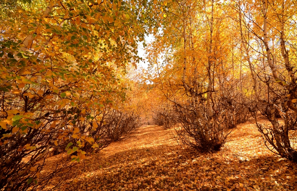 Kars'ta Sonbahar Güzelliği 4