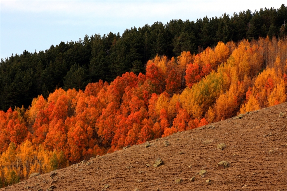 Kars'ta Sonbahar Güzelliği 5
