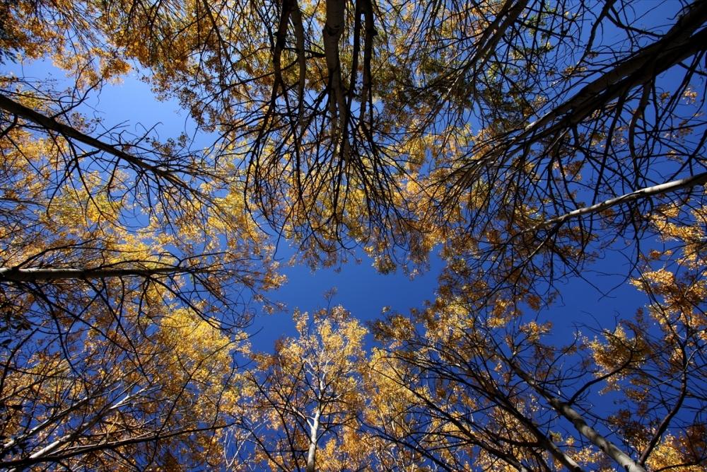 Kars'ta Sonbahar Güzelliği 8