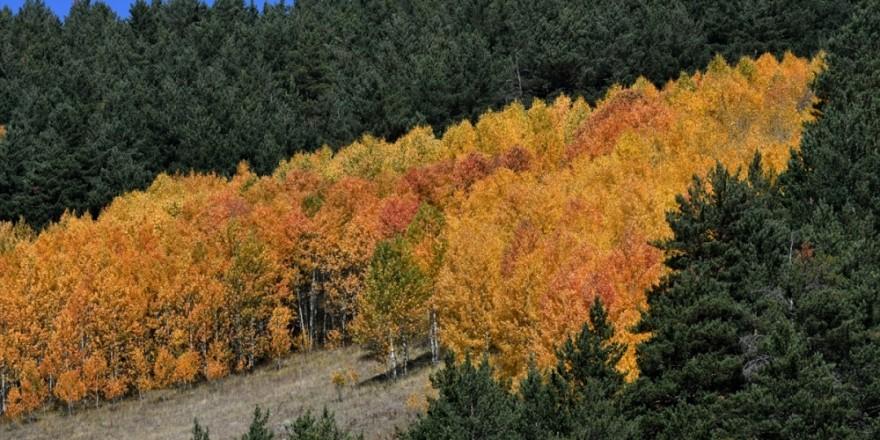 Kars'ta Sonbahar Güzelliği