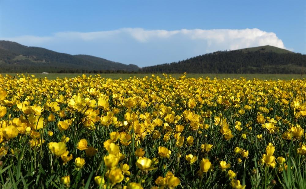 Sarıkamış'ta Bahar Tüm Güzellikleriyle Yaşanıyor 2