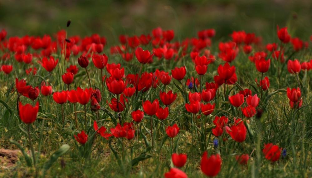 Sarıkamış'ta Bahar Tüm Güzellikleriyle Yaşanıyor 6