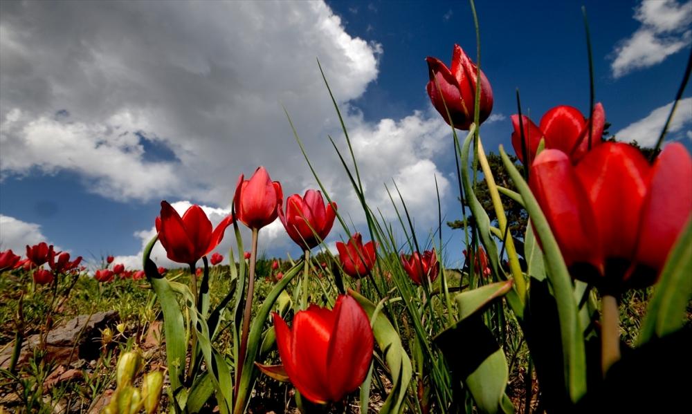 Sarıkamış'ta Bahar Tüm Güzellikleriyle Yaşanıyor 7