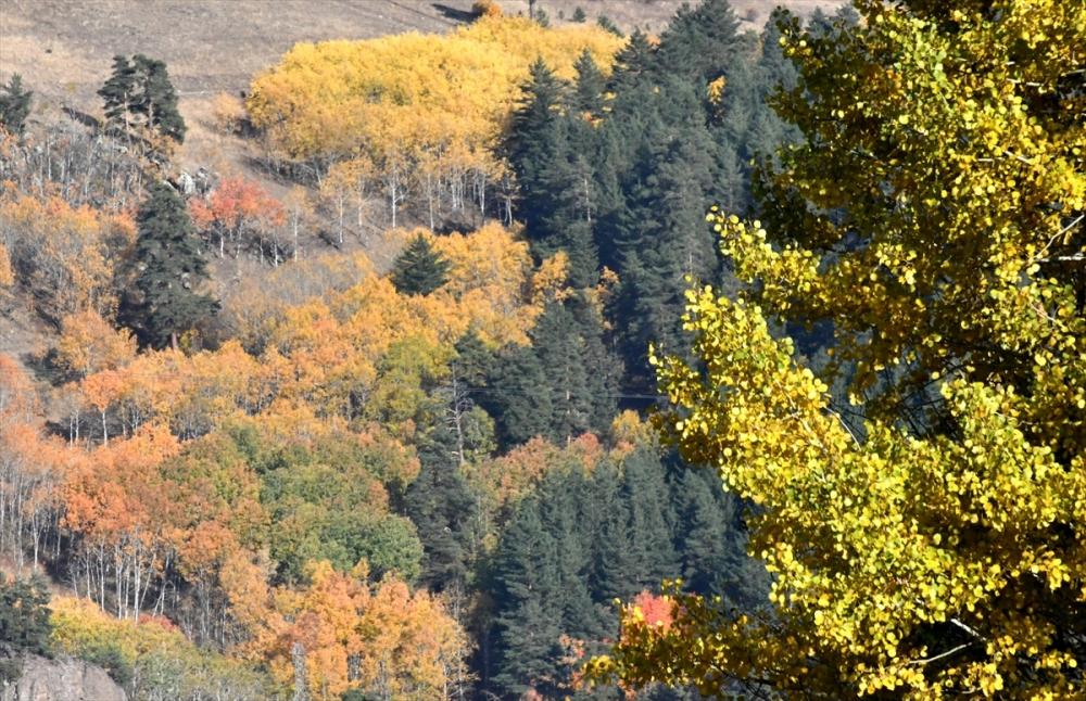 Sarıkamış Ormanları'nda Sonbahar Güzelliği 2