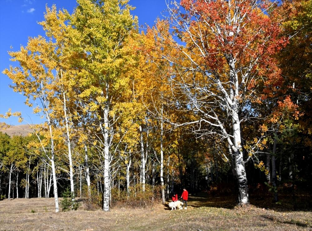 Sarıkamış Ormanları'nda Sonbahar Güzelliği 4
