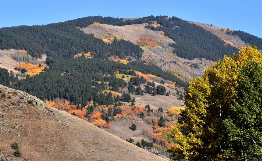 Sarıkamış Ormanları'nda Sonbahar Güzelliği 7