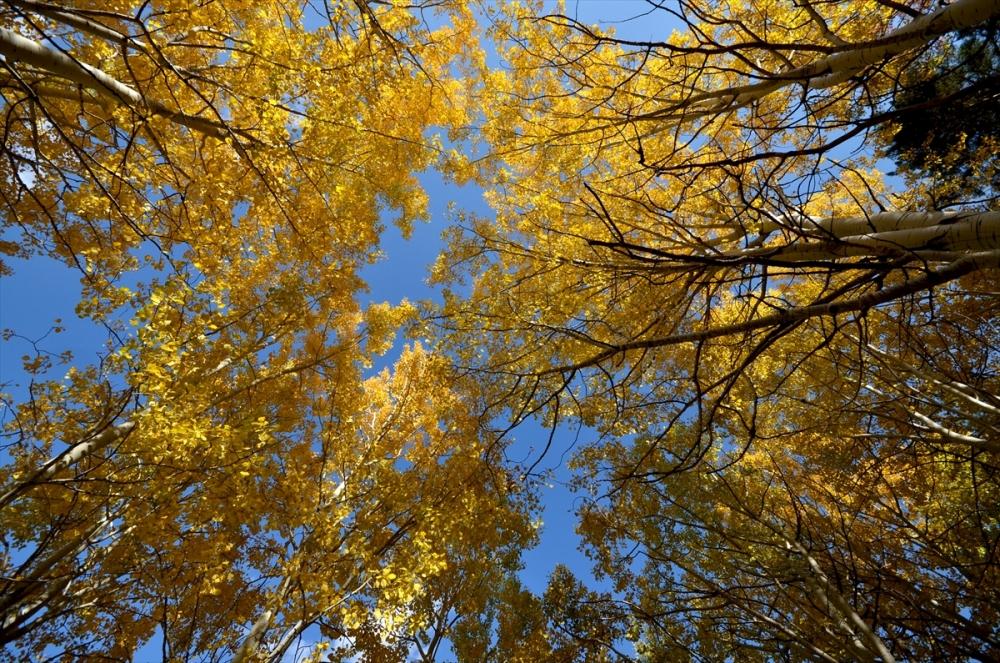 Sarıkamış Ormanları'nda Sonbahar Güzelliği 8
