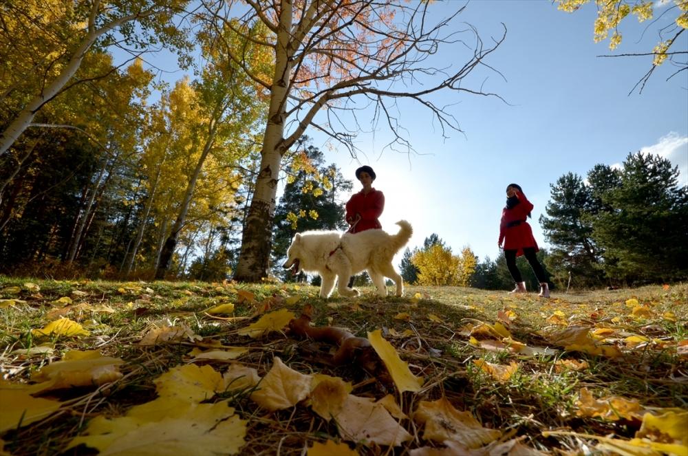 Sarıkamış Ormanları'nda Sonbahar Güzelliği 9