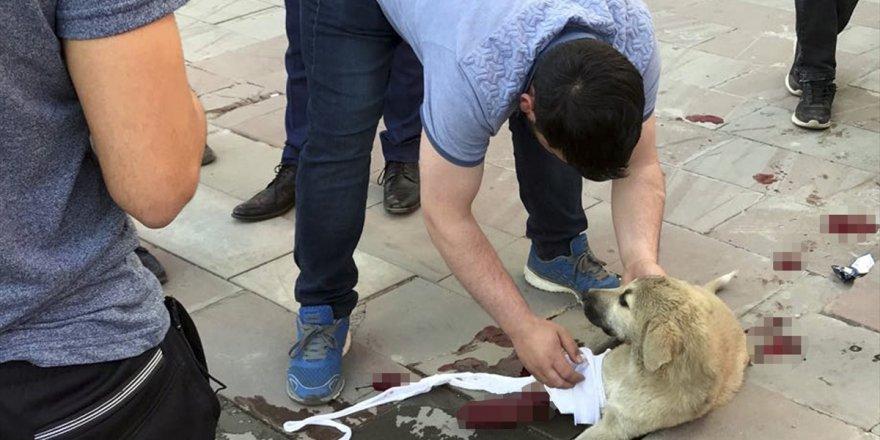 Kars'ta Yaralı Yavru Köpeğe Vatandaşlar Sahip Çıktı