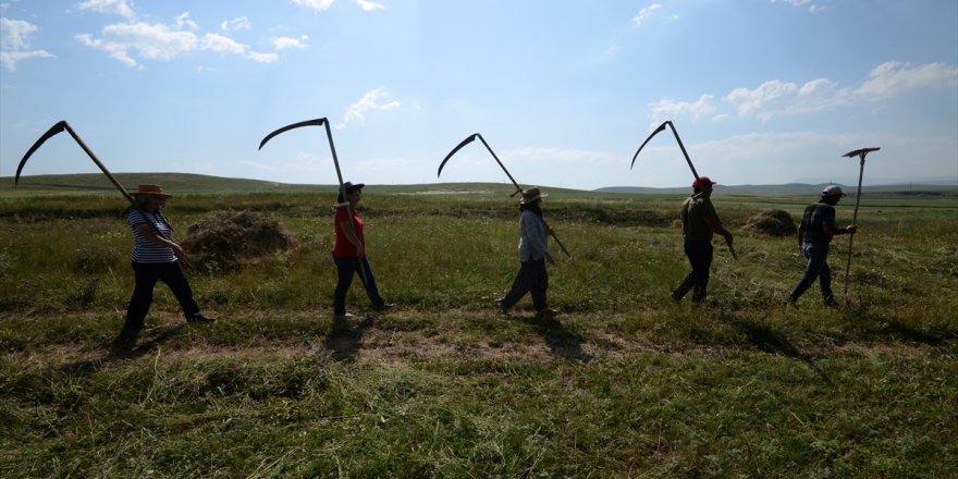 Kars'lı Kadınların Tırpan Mesaisi Başladı!