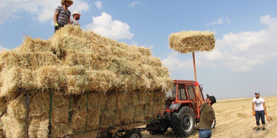 Kars'ta Sıcak Havada Çiftçilerin Ot Toplama Mesaisi