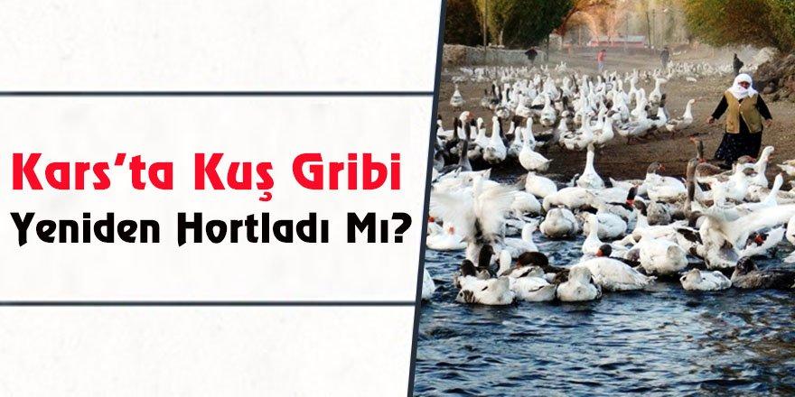 Kars'ta Kuş Gribi Yeniden Hortladı Mı?