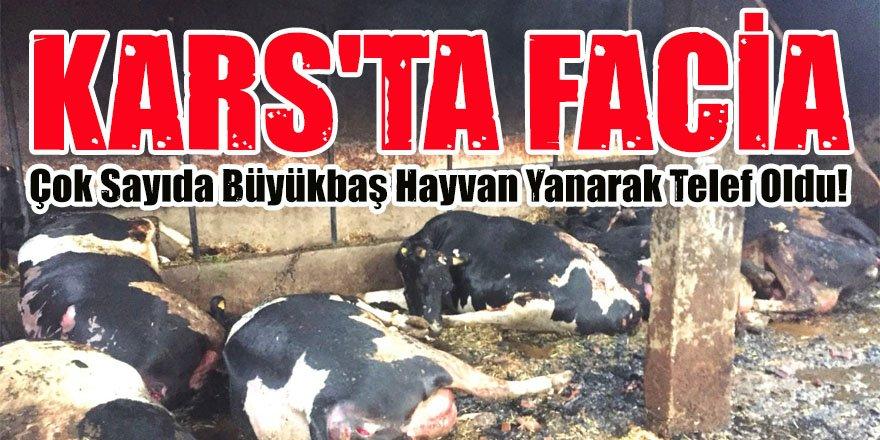 Kars'ta Facia 13 Büyükbaş Hayvan Yanarak Telef Oldu!