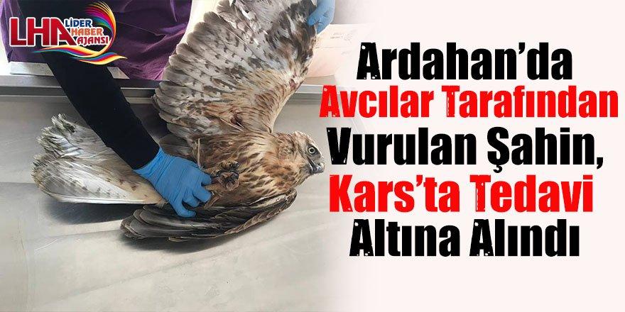 Ardahan'da avcılar tarafından vurulan şahin, Kars'ta tedavi altına alındı