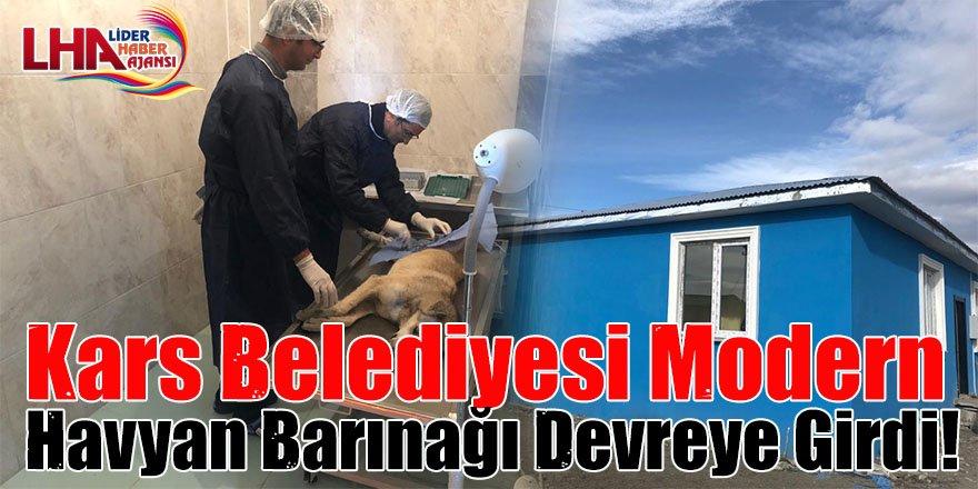Kars Belediyesi Modern Havyan Barınağı Devreye Girdi!