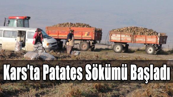 Kars'ta Patates Sökümü Başladı