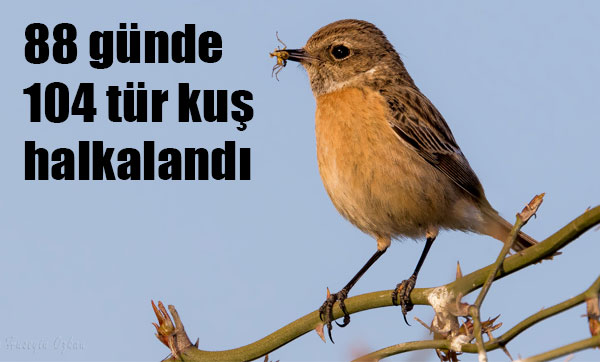 88 günde 104 tür kuş halkalandı