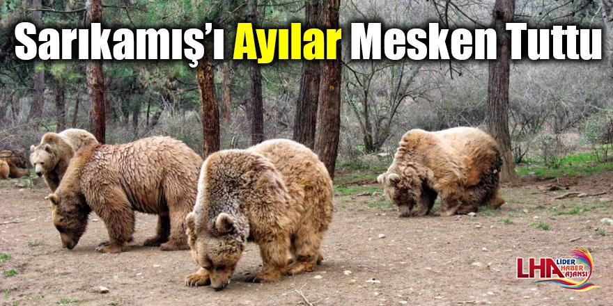 Sarıkamış'ı ayılar mesken tuttu