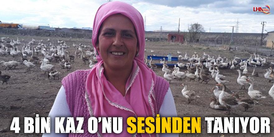 4 BİN KAZ O'NU SESİNDEN TANIYOR