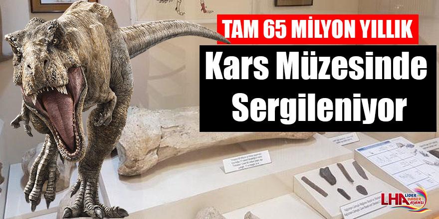 Kars Müzesinde 65 milyon yıllık Trinazor (T. rex ) kemiğinin sergilendiğini biliyor muydunuz?