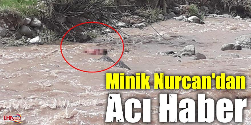 Minik Nurcan'dan Acı Haber