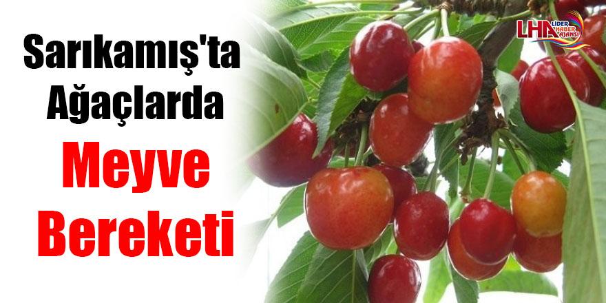 Sarıkamış'ta ağaçlarda meyve bereketi