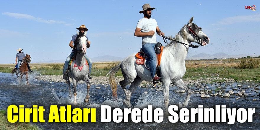 Cirit Atları Derede Serinliyor