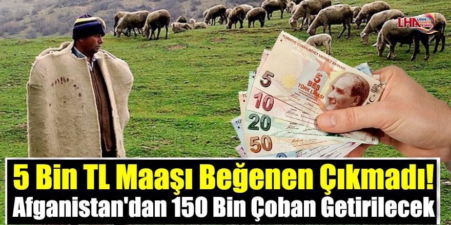5 Bin TL Maaşı Beğenen Çıkmadı! Afganistan'dan 150 Bin Çoban Getirilecek