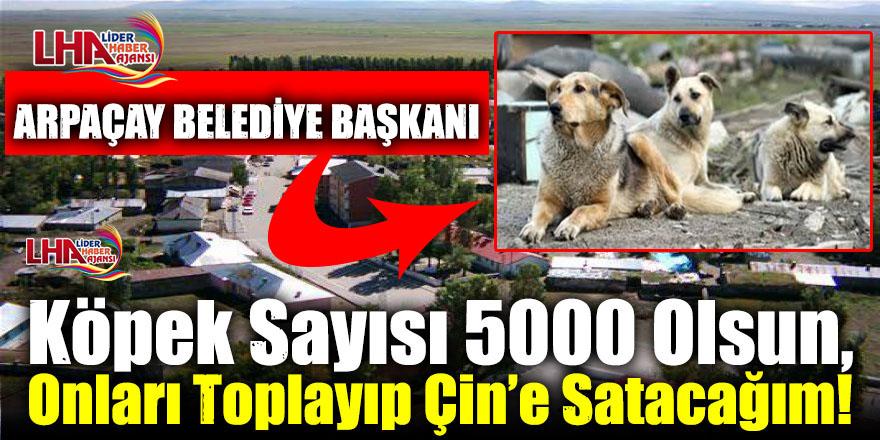 Kars'ta O Başkan Köpek Sayısı 5000 Olsun, Onları Toplayıp Çin'e Satacağım!