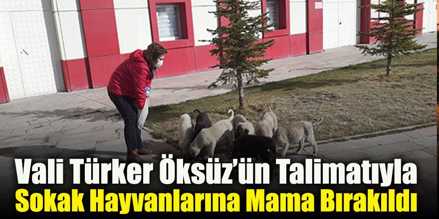 Vali Türker Öksüz'ün Talimatıyla Sokak Hayvanlarına Mama Bırakıldı