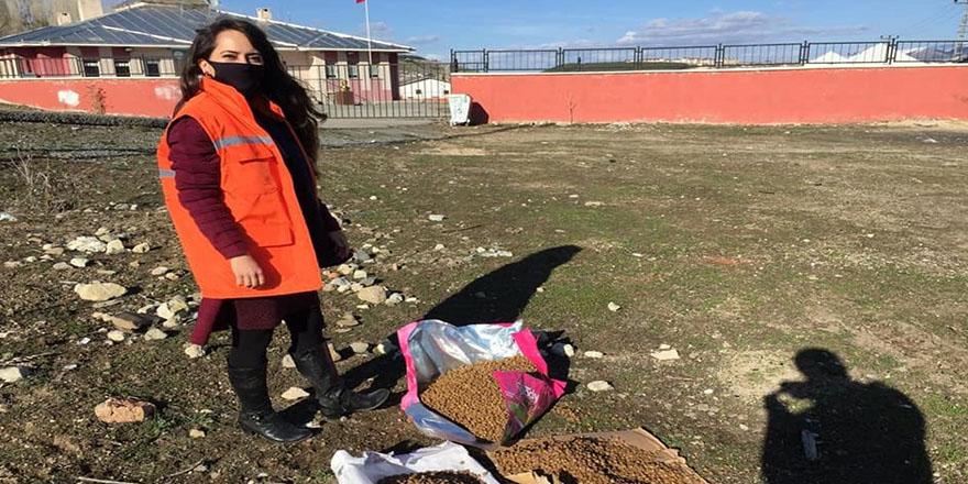Sarıkamış Kaymakamlığı sokak hayvanları için mama ve su bıraktı