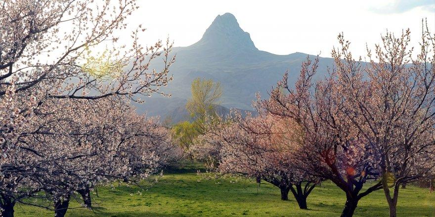 Bahar havası Iğdır'ın dağlarında görsel şölene dönüştü
