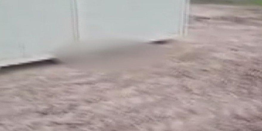 Başkent'te çok sayıda ölü köpek yavrusu bulundu