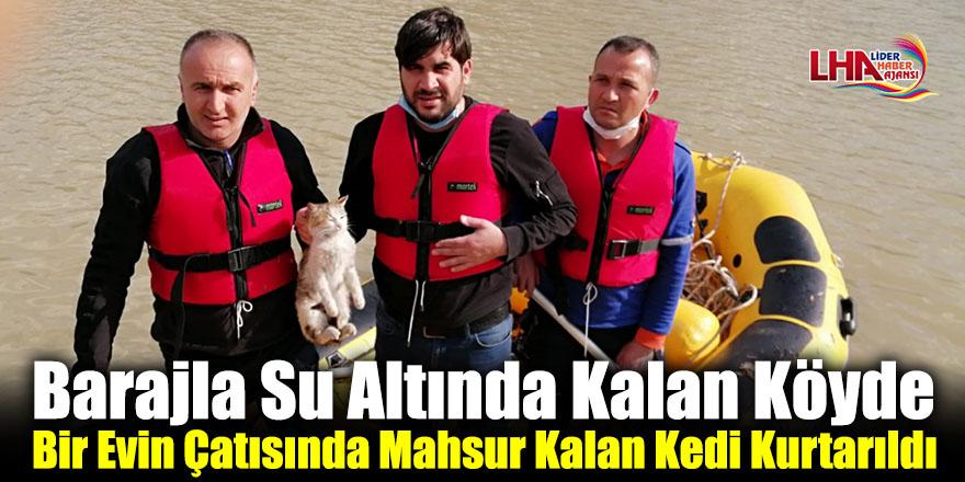 Barajla Su Altında Kalan Köyde Bir Evin Çatısında Mahsur Kalan Kedi Kurtarıldı