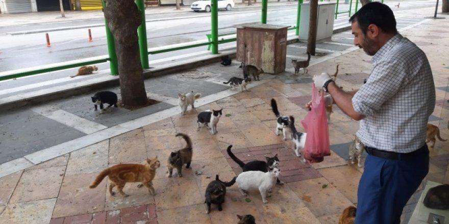 Aç kalan kediler otele akın etti