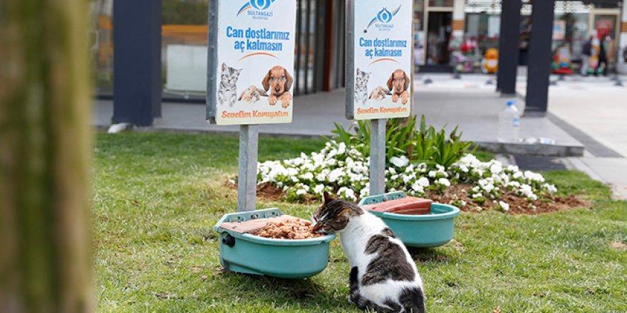 Sultangazi'de sokak hayvanlarına mama desteği