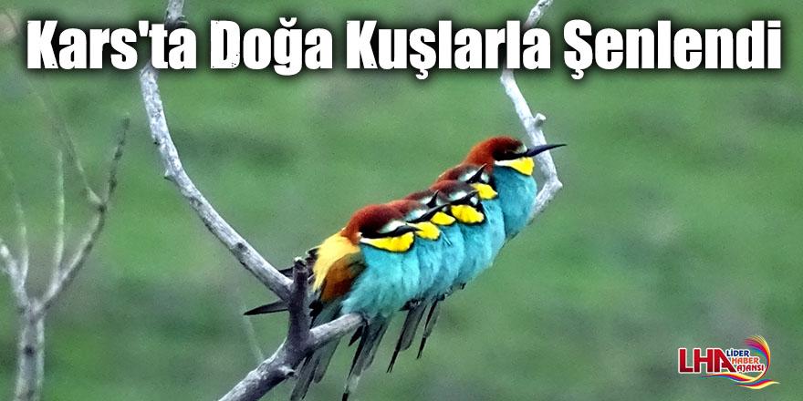 Kars'ta Canlanan Doğa Kuşlarla Şenlendi