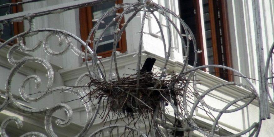 Taksim İstiklal Caddesi'nin göbeğindeki ilginç kuş yuvası
