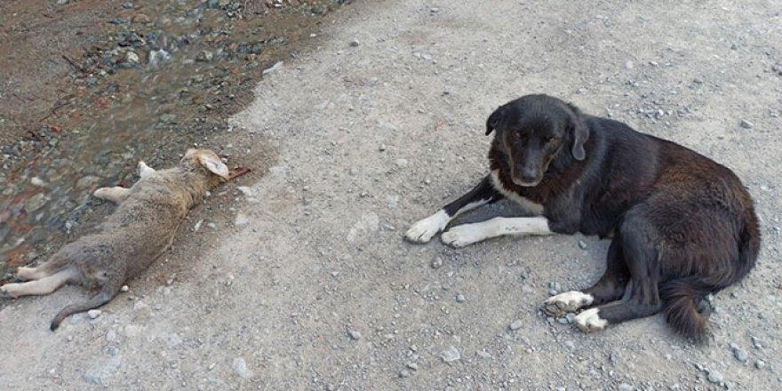 Anne köpek ölen yavrusunun başından saatlerce ayılmadı