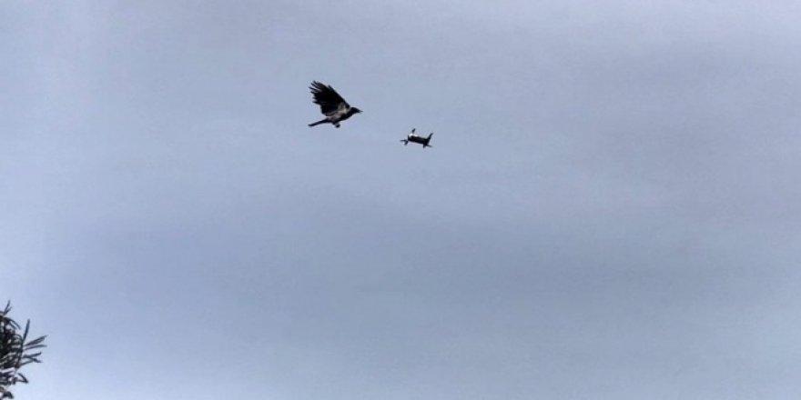 Karganın droneye saldırısı renkli görüntülere sahne oldu