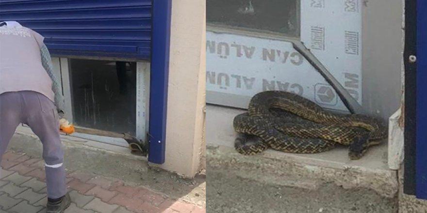 Sıcaklar tavan yaptı, yılanlar ortaya çıkmaya başladı