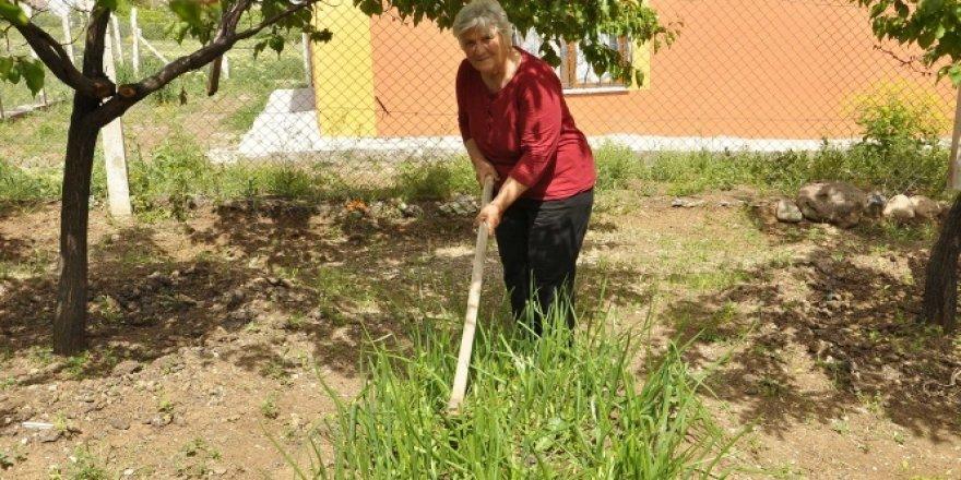 Sokağa çıkmayan yaşlı kadın doğal sebze yetiştirerek gününü geçiriyor