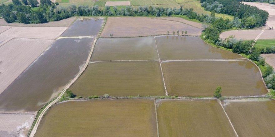 Türkiye'nin en kuzeyi Sinop'ta çeltik ekimi başladı