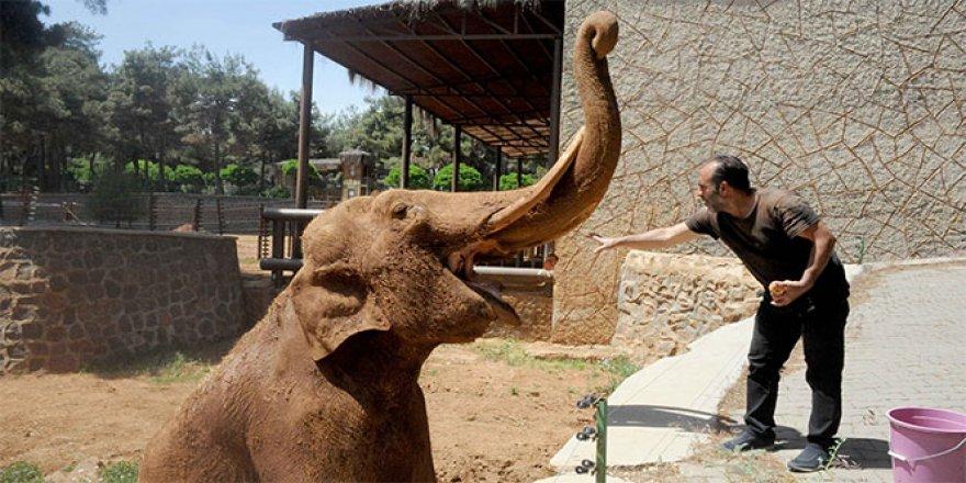 Fillerin 10 yıllık eş hasreti sona eriyor