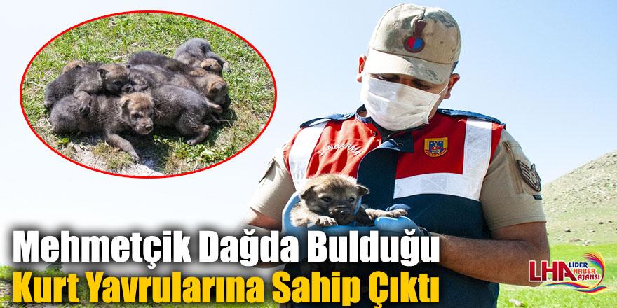 Mehmetçik Dağda Bulduğu Kurt Yavrularına Sahip Çıktı