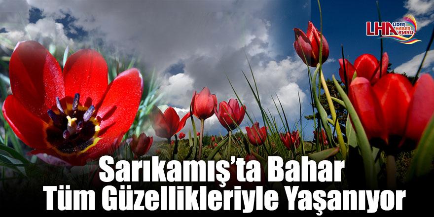 Sarıkamış'ta Bahar Tüm Güzellikleriyle Yaşanıyor