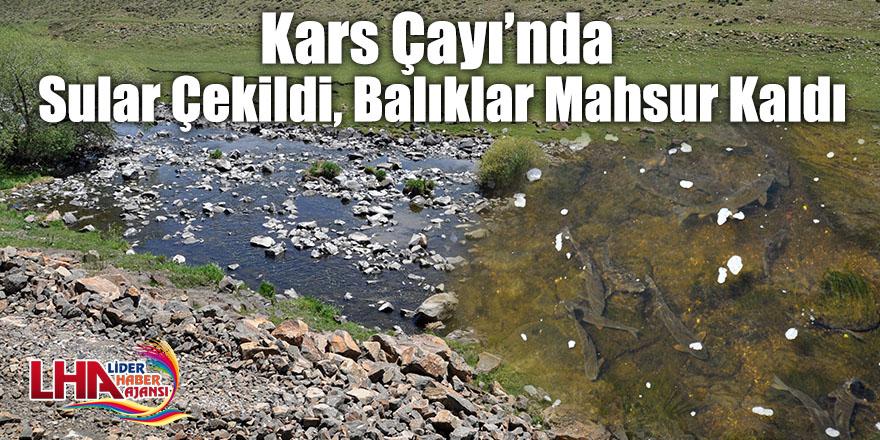 Kars Çayı'nda Sular Çekildi, Balıklar Mahsur Kaldı