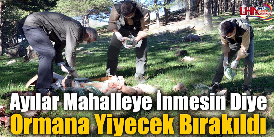 Sarıkamış'ta Ayılar Mahalleye İnmesin Diye Ormana Yiyecek Bırakıldı